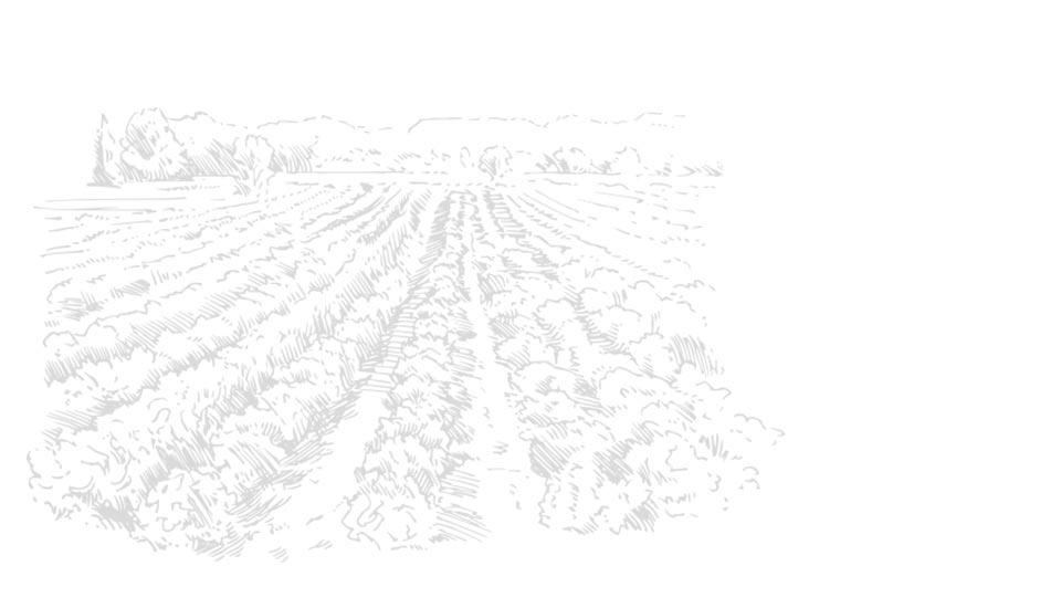 Gravure Vignoble de la Clape - Sud de France